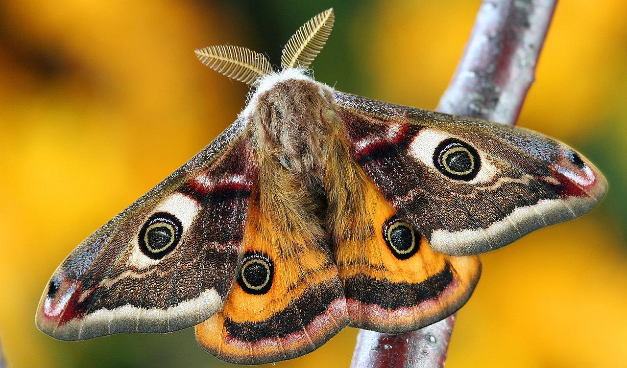 moth pest control